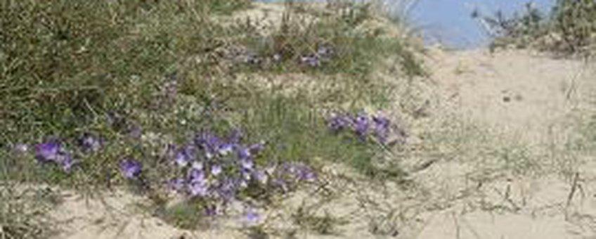 Stuivend duin. Deze foto mag alleen gebruikt worden bij nieuwsbericht Natuurmonumenten 8 oktober 2012
