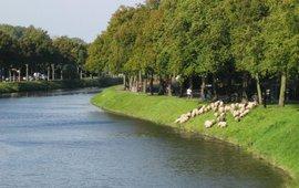 Schapen langs de Neermeerskaai te Gent
