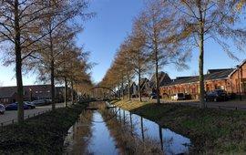 20201225_Elzen vol in bloei Ederveen Arnold van Vliet