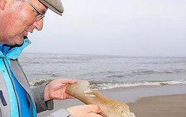 Een gevonden orkabot op het strand