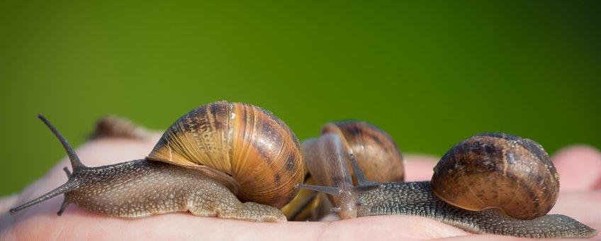 Slakken bodemdierendagen