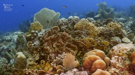 Curaçao coral reefs