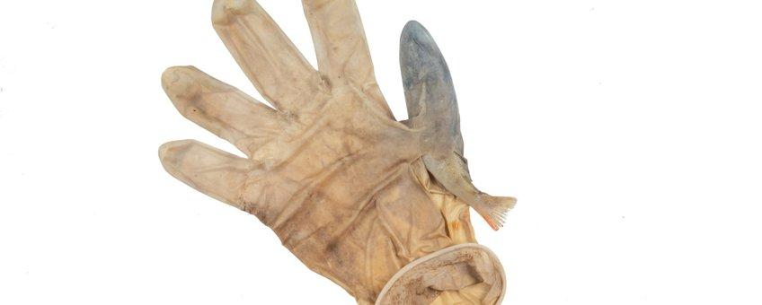 Latex handschoen waarin baars gevangen was geraakt in Leidse grachten