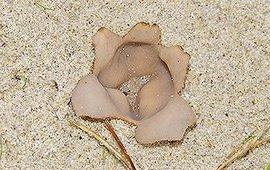 Zandputjes zijn dit jaar al veel gezien