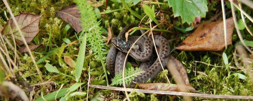 Pas geboren gladde slang