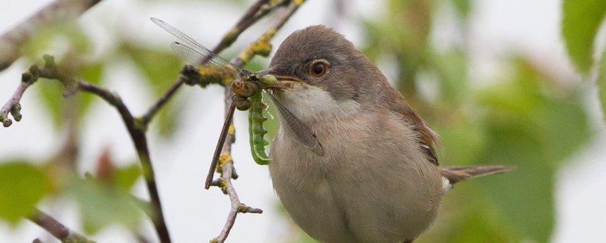 Vogel met insect