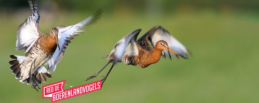 Red de boerenlandvogels