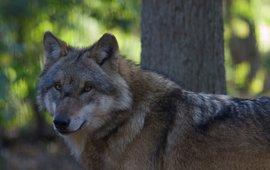 Wolf EENMALIG GEBRUIK