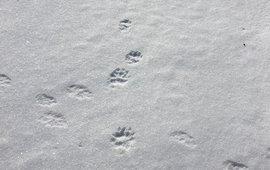 Sporen in sneeuw
