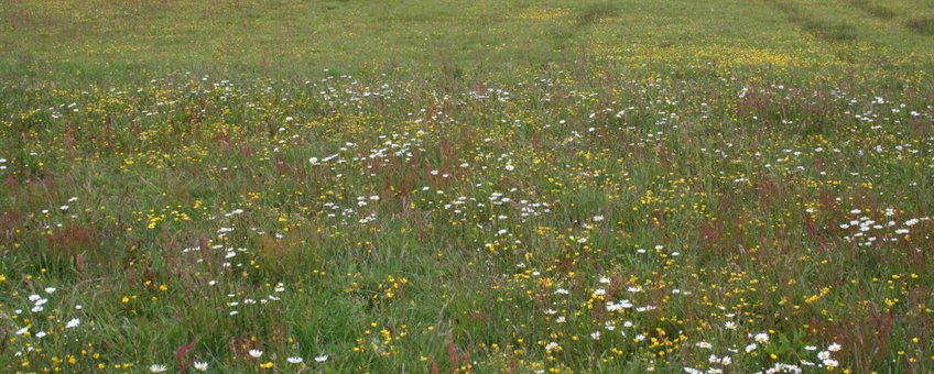 Beekbergerwoud pilot kruidenrijk grasland
