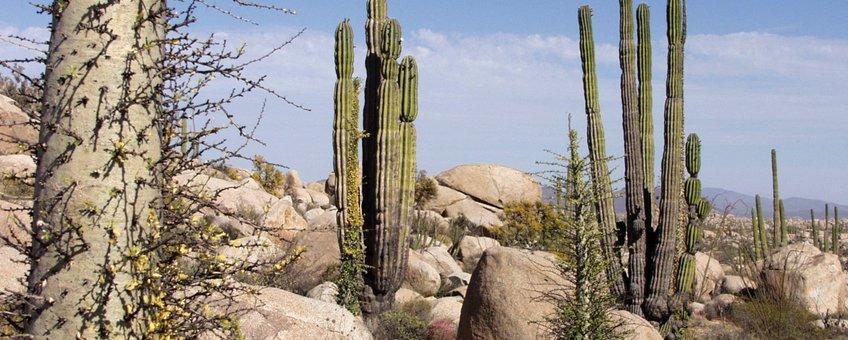 Baja California, woestijn, desert