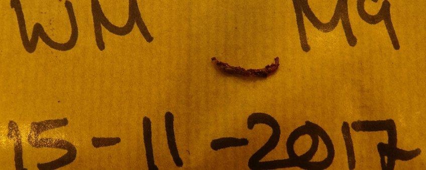 Jonge worm in marsbodemexperiment