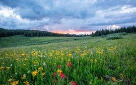 grassland; grasland