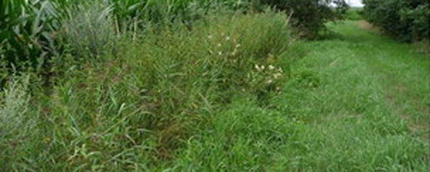 Vindplaats Calycellina spiraeae