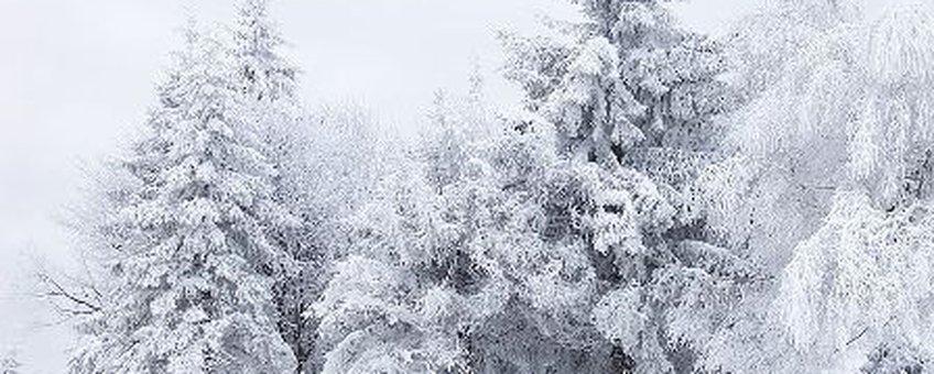 Sneeuwlandschap, GNU-licentie voor vrije documentatie