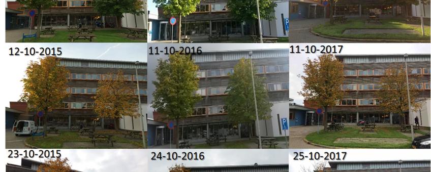 Fotoserie met het verloop van de bladverkleuring van twee witte paardenkastanjes in 2015, 2016 en 2017.