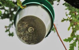 Feromoonval eikenprocessievlinder