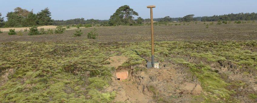 ) In totaal zijn bijna dertig nestkasten ingegraven om tapuiten te verleiden weer op de Veluwe te komen broeden (alternatief)