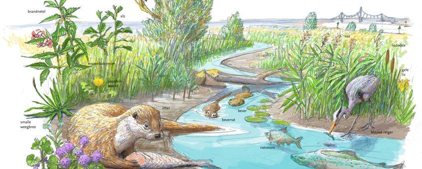 Leefgebied Otter