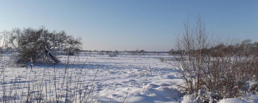 Stappersven in de sneeuw