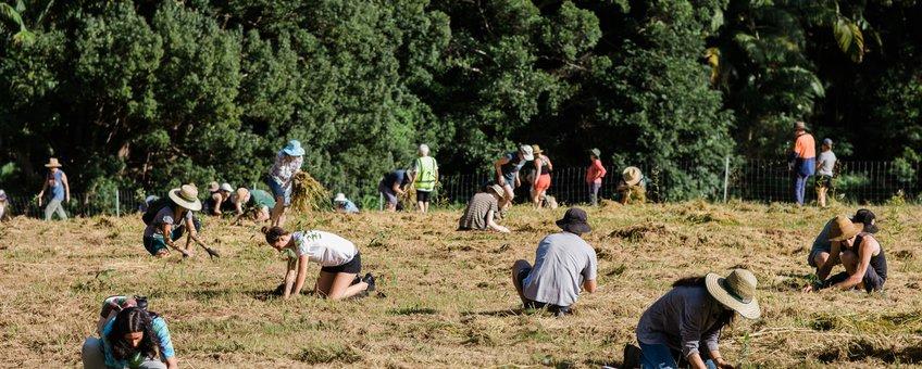 Boomplantactie van IFAW en Bangalow Koalas in New South Wales