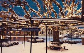 Moeierboom winterverlichting Etten-Leur boom jaar 2020