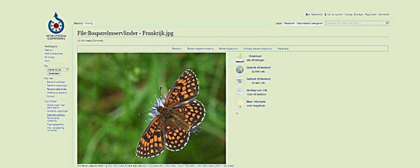 primair wiki