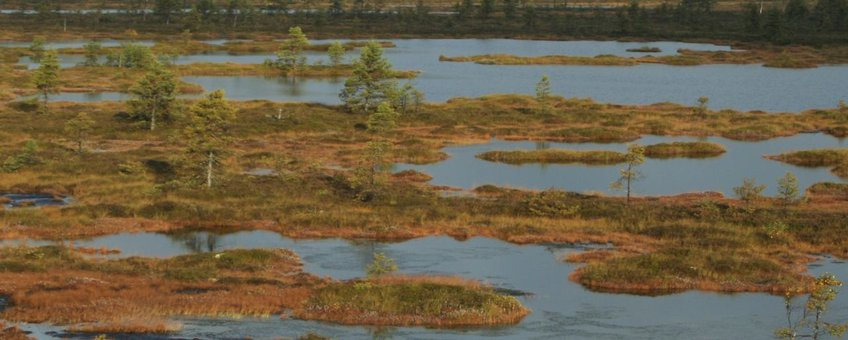 Plassen in intact hoogveen in Estland