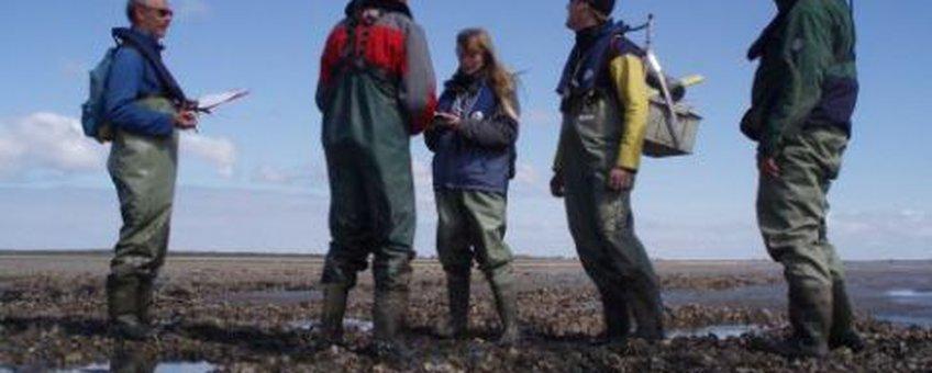 Onderzoekers brengen ontwikkelingen op deze mosselbank onder Ameland in kaart. De mosselbank is voor een groot gedeelte bezet met Japanse oesters.Piet Wim van Leeuwen, Wageningen IMARES