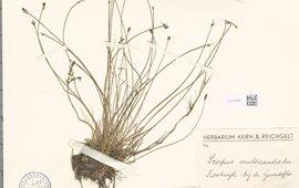 herbariumvel