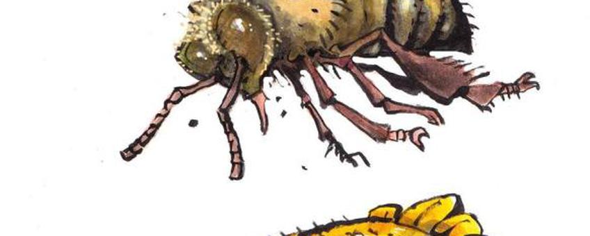 Logo Wageningen Zoemt Bijenfestival