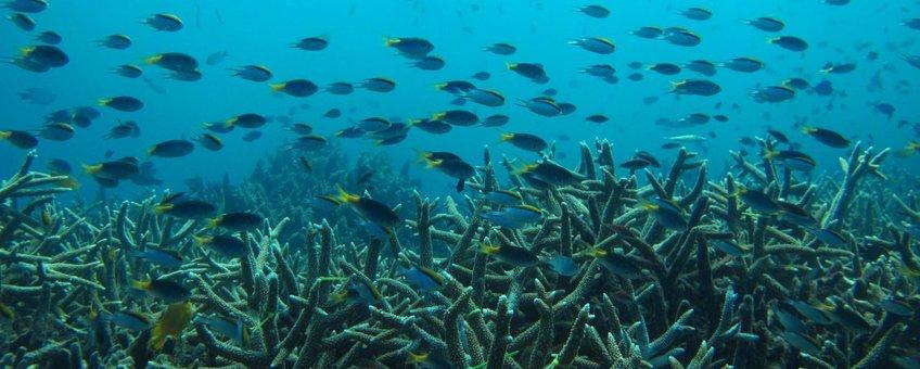 Great barrier reef, koraalrif