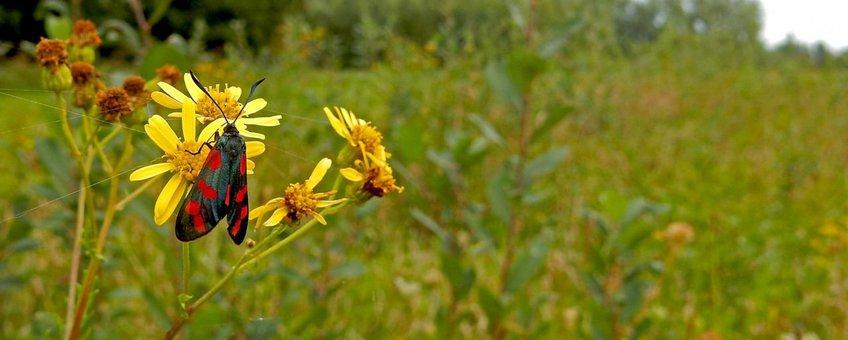 sint-jansvlinder september primair