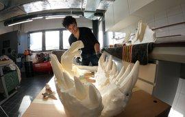 3D-modelleur en anatoom Pasha van Bijlert met de 3D-print van Trix