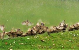 Aangeleverde eikenprocessievlinders in zakken uit feromoonvallen