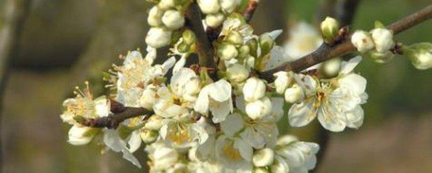 Afbeelding van www.bloesem.info. Alleen opnemen ovv website