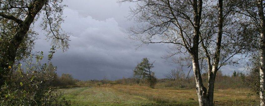 Bovenveengrasland aan de rand van hoogveengebied het Bargerveen