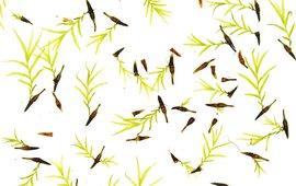 Huikjes met uitgroeiende jonge mosplanten