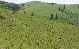 aanplant bos op grasland bremvlinder