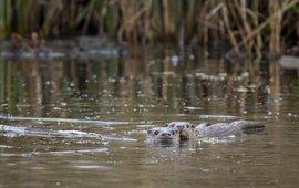Otter De Wieden