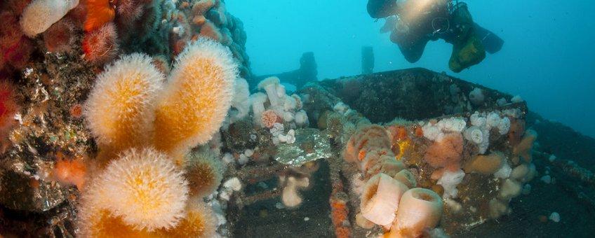Kunstmatige riffen, olie- en gasplatforms, windturbines en scheepswrakken, vormen een goede vestigingsgrond voor bodemdieren