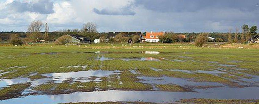 voor eenmalig gebruik, Natte weilanden op Texel