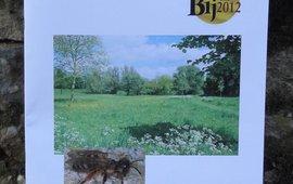 Het rapport Wilde bijen in Deventer