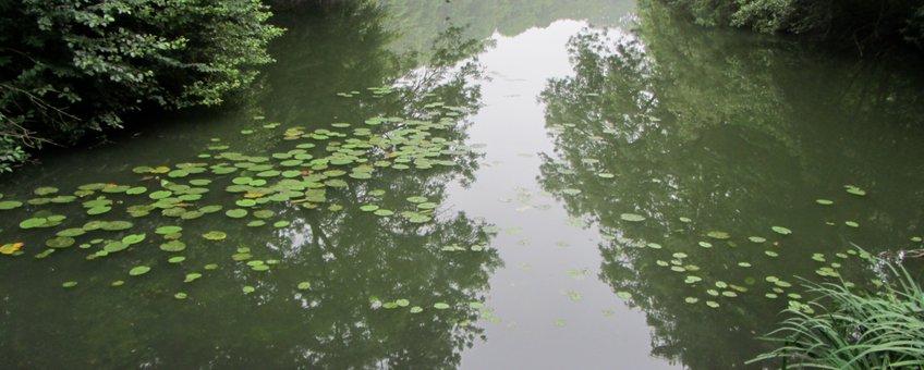 Kolk in park Westerveld bij Arnhem