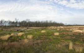 Herstel van Stuifzand op Strabrechtse Heide
