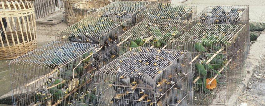 Vogelmarkt in Zuidoost-Azië