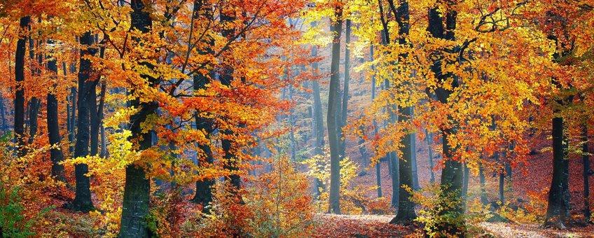 Herfst - bos