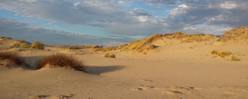 Foto van goed ontwikkelde Grijze duinen gemaakt midden in het duingebied Meijendel ten noorden van Den Haag. Deze foto is gemaakt op 8 december 2016 tijdens een veldbezoek.