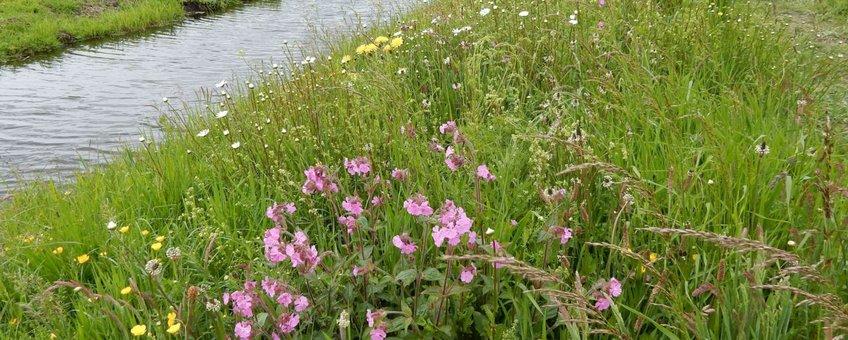 bloemrijke plek in boerenland primair