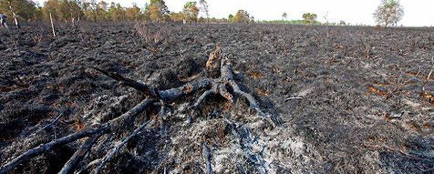 verbrand fochteloerveen - Jelger Herder ravon
